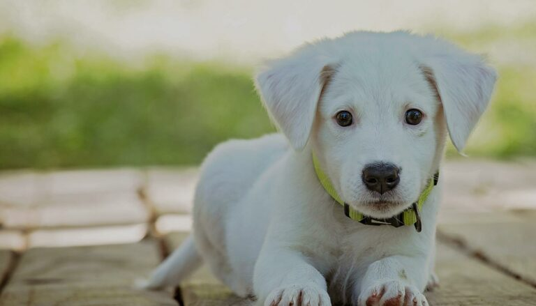 Small puppy outside